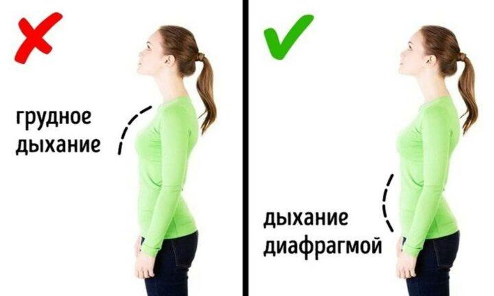 dykhanie-zhivotom